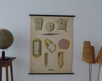 Original Vintage Cell School Chart - Authentic Cell Poster - Germany Mid Century