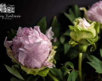 Floral Photography, Home Decor Photography, Still Life Photography, Flower Photography, Vintage Decor Photography, Peony