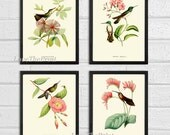 Hummingbird Print SET of 4 Art  Beautiful Antique Humminbirds Birds Tropical Pink Flowers Botanical Garden Illustration Decor to Frame