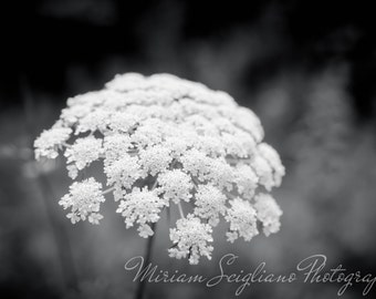 """Title: """"Natures Lace"""", Black and White Photography, contemporary photo, Chic Rustic Photography, 5""""x7"""" art print, Country photography, decor"""