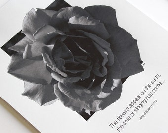 Song of Solomon Rose Scripture Black and White Poster Print