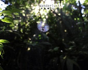 Monteverde Cloud Forest Spiderweb