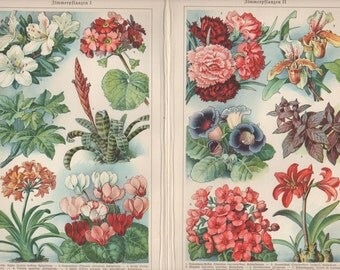 House Plants Wall Print, Floral Wall Decoration, Original Lithograph from Antique German Encyclopaedia, Flowers Wall Decor