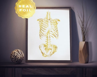 Rib Cage Anatomy 4x6 - 5x7 - Anatomy Art - Medical Student Gift - Medical Office Decor - Anatomy Decor - Med Student - Doctor Gift
