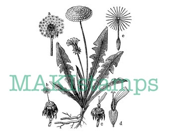 Dandelion rubber stamp /  encyclopedia rubber stamp / Unmounted rubber stamp or cling stamp (160310)