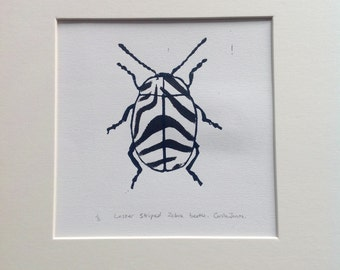 Lesser striped zebra print beetle.