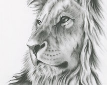 "Charcoal Drawing, 8""x10"" ORIGINAL Lion Art, Lion Drawing, Lion Sketch, Charcoal Lion, Charcoal Sketch,  African Cat Art"
