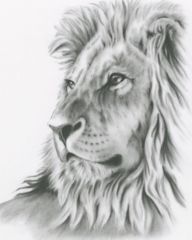 Dessin au fusain 8 x 10 art lion original dessin lion - Dessin facile lion ...