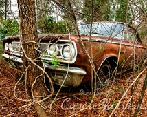 1965 Dodge Coronet in the Woods Photograph
