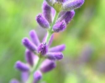 Photo Print - Purple Flower Macro - Nature Photography, Flower Photography, Floral Print