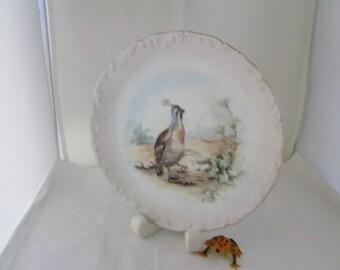 Handpainted Bird Fine China Plate California Quail plate Bird plate Bird wall plate Bird wall hanging China bird plate California bird plate