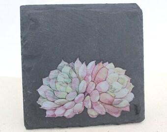Succulents Slate Coasters Set of 4