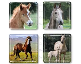 Set of 4, Horse Magnets, Glass Tile Magnets, Glass Magnet, Refrigerator Magnets, Fridge Magnets, Horse Lover, Horse Gift, Foal, Colt, Animal