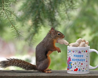 Birthday Print, Funny Birthday, Happy Birthday, Squirrel Art, Birthday Gift, Funny Art, Squirrel Photograph,Birthday Present, Funny Animals