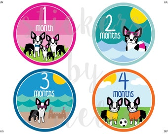 Month by Month Baby Girl Stickers - Boston Terrier