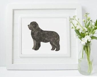 Newfoundland Dog Print