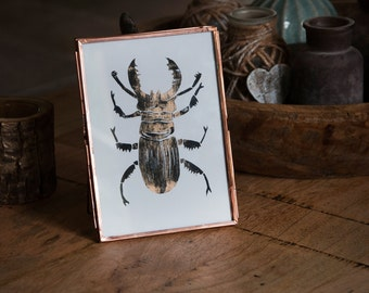 Stag beetle lino