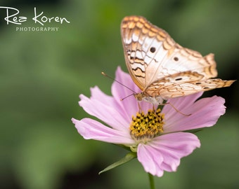 Blank Photo Greeting Card - Butterfly - 4