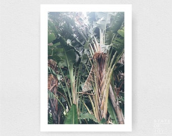 island photograph - coastal surf decor - palm trees - nature - wall art - portrait - square prints | LARGE FORMAT PRINT