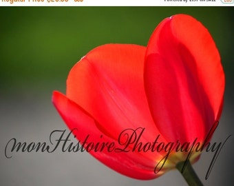 25% off Red Tulip, Nature Photography