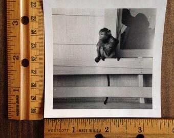 Vintage Monkey Photo