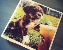 Starbucks Puppy Dog Ceramic Tile Drink Coaster; Home Decor; Custom Coaster; Funny; Puppachino; Dog Lover Gift; Cute Dog Gift; Starbucks Gift