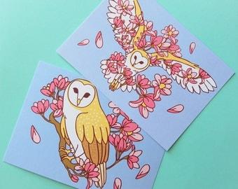 PAIR of 5x7 Barn Owl prints