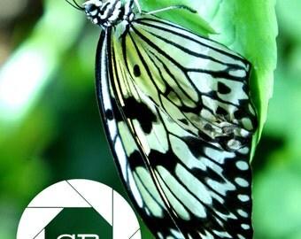 Upside Down Butterfly