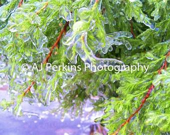 Frozen Branch 8x10