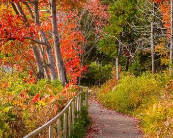 Along the Ocean Path at Acadia