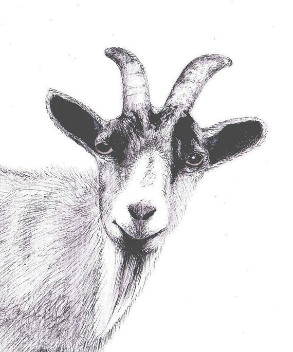 Goat - Part Of My Original Ink Drawing - Art Print