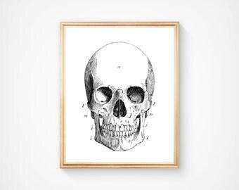 Human Anatomy Art, Anatomy Print, Vintage Anatomy Poster, Digital Download, Anatomy Illustration, Human Biology, Vintage Art, Antique Print