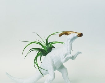 Large White + Gold Parasaurolophus Dinosaur Planter with Air Plant; Dino Planter; Home Decor; Desk Accessory; Office Planter; Gift