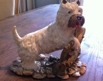 Old, Teviotdale, west highland terrier, westie.
