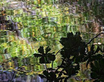 "William Hornaday Photo, Aqua Terra 4911, 13x19"" print"