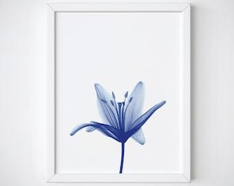 Botanical Print - Flower Print - xray flower - flower photography - blue flower print - blue botanical print - Blue Wall Art - Flower art