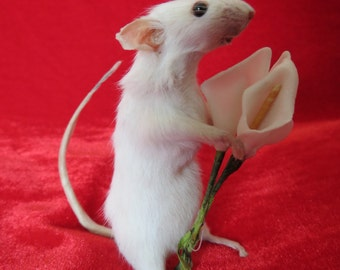 Lily White Mouse - Taxidermy, Mouse Holding Three Miniature Lilies, Freestanding