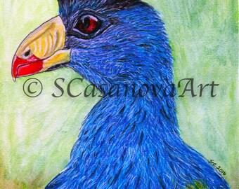 Great Blue Turaco Bird - Art Print