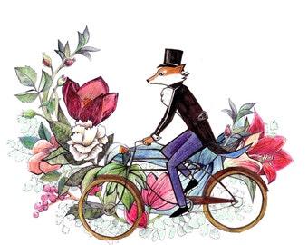 A cycling fox