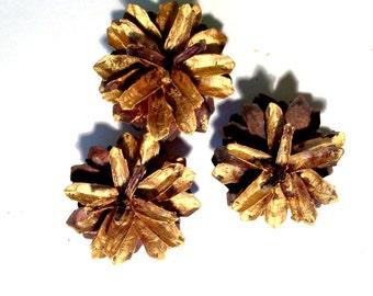 Gold Pine Cones, Bulk Pine Cones, Natural Pinecone, Pine Cone for Home Decor