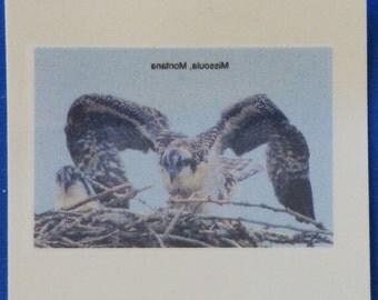 "Temporary Tatoo - ""Phoenix"" Osprey Chick"