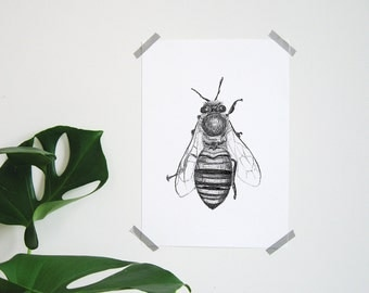 Hand-drawn at A4 poster-hand drawn bee print