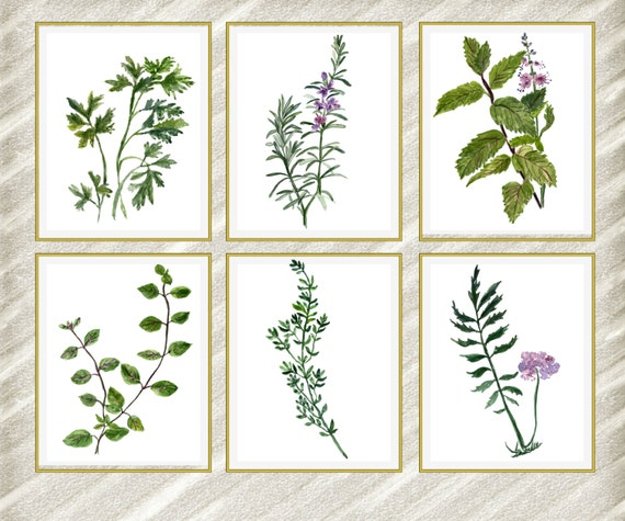 Watercolor Herbs Print: HERB WALL ART Kitchen Wall
