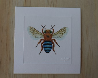 Blue-Banded Bee Miniature Print x 1