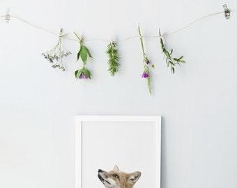 Nursery fox print - Printable nursery animals - Photography animals - Nursery wall art - Nursery decor - Gender neutral nursery art