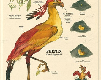 The Phoenix / the Phoenix print - cabinet of curiosities by the artist Camille Renversade Deyrolle poster