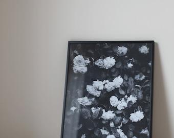 In Full Bloom #1 - Art Print