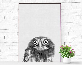 Owl Print, Woodlands Nursery Decor, Wilderness Wall Art, Printable Owl Poster, Black White and Grey, Animal Photo, Gender Neutral Kids Room