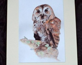 Tawny Owl Print