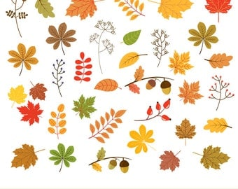Autumn leaf clip art, Fall leaf clipart, Fall foliage clip art, Autumn leaf clipart, Digital red leaf, Yellow leaf graphic, Leaf image